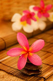 Tropical spa with Frangipani flowers. Royalty Free Stock Images