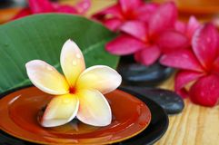 Tropical spa icons. Tropical frangipani, therapy stones and scented water Stock Photography