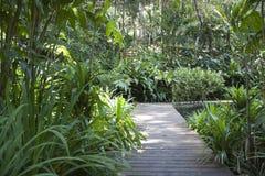 Tropical Spice Garden Stock Image