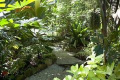Tropical Spice Garden stock photos