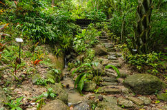Tropical Spice Garden in Penang, Malaysia. The tropical Spice Garden in Penang is an 8-acre garden with over 500 tropical flora Royalty Free Stock Images
