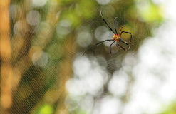 Tropical spider Stock Photos