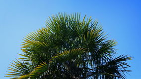 Tropical Spiky Plant In The Sun. Large exotic plant with spiky leaves on sunny day stock footage