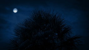 Tropical Spiky Tree At Night. Spiky tree with full moon above in the dark stock video