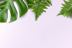 Free Tropical Split Leaves And Fern On Pastel Pink Background Royalty Free Stock Photos - 125487778