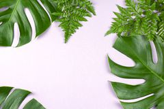 Free Tropical Split Leaves And Fern On Pastel Pink Background Stock Image - 125487791