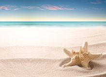 A tropical starfish laying in the beach sand royalty free stock photo