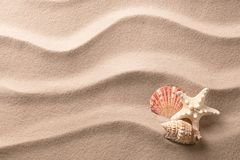 A tropical starfish and sea shells laying in the beach sand royalty free stock photos