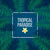 Tropical starry night paradise background template Royalty Free Stock Photo