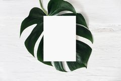 Tropical stationery mock-up scene. Blank greeting card and green monstera leaf on white shabby table background. Swiss royalty free stock photos