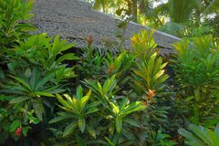 Tropical still life. With vegetation and roof Stock Photography