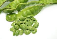 Tropical stinking edible beans (Parkia Speci Stock Image
