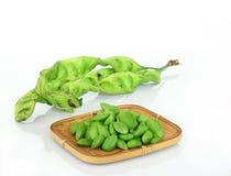 Tropical stinking edible beans on white. (Parkia Speciosa) Stock Photography