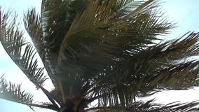 Tropical storm Aruba island in the caribbean stock video footage