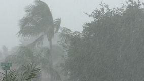 Tropical storm in 4K. Tropical storm in Florida filmed in 4K stock video footage
