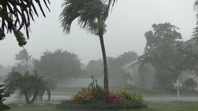 Tropical storm in 4K stock footage