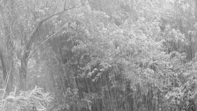 Tropical storm rain. Atlantic tropical storm rain in the summer, black and white video clip stock video footage
