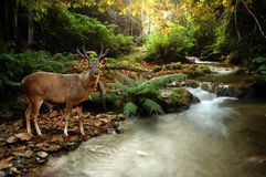 Tropical stream Stock Images