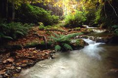 Tropical stream Stock Photos