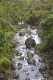 Tropical Stream Royalty Free Stock Photos