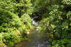 Tropical stream stock photos