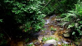 Tropical stream in the forest. Clean and fresh natural stream in the tropical forest stock video footage