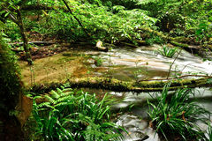 Tropical stream Stock Photo