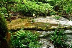 Tropical stream Stock Photo