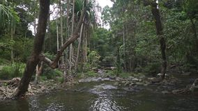 Tropical stream in the jungle stock video footage