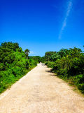 Tropical Street Stock Images