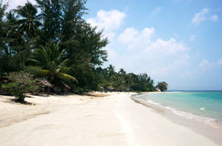 Tropical stretched out white sand beach and palm trees with blue ocean. Royalty Free Stock Images