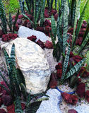 Tropical style dry rockery landscaping royalty free stock photos
