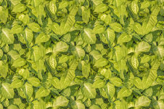 Tropical Style Leaves Motif Seamless Pattern Royalty Free Stock Photo