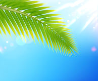 Tropical summer background Royalty Free Stock Photos