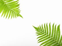Tropical summer background. Fern branches isolated on white background. Flat lay. Minimal concept. Tropical summer background. Fern branches isolated on white stock photos