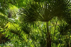 Tropical summer background - green exotic leaves Stock Photos