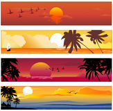 Tropical summer banner Royalty Free Stock Photo