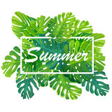 Tropical summer banner, poster with  monstera leaves, jungle leaf. Beautiful vector floral background. Tropical summer banner, poster with  monstera leaves Royalty Free Stock Image