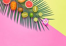 Tropical Palm Leaf, Fruits.Bright Summer Set.Vegan. Tropical Summer Design Set. Palm Leaf and Fresh Fruits. Trendy Fashion concept. Vegan Colorful Flat lay royalty free stock photography