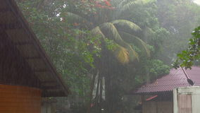 Tropical summer downpour stock video footage
