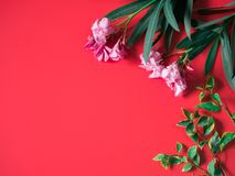Tropical and summer flatlay minimal concept from pink flower wit. H tropical tree leaf arrange on red background with copy space Royalty Free Stock Photos