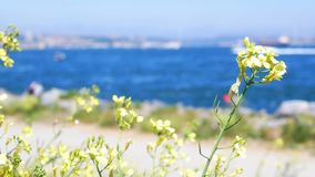 Landscape beach flowers sea. Tropical summer landscape with beach. Flowers and palm on first plan and sea stock footage