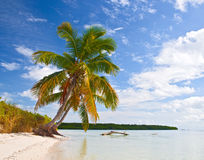 Tropical summer with palm trees Stock Photography
