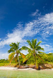 Tropical summer with palm trees. Summer at a tropical paradise in Florida Keys, USA with palm trees, blue sky, clouds and crystal clear water of Atlantic Ocean Royalty Free Stock Photography
