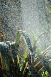 Tropical summer rain. A strong and heavy summer rain in opposite sunshine light in the garden outdoors Stock Images