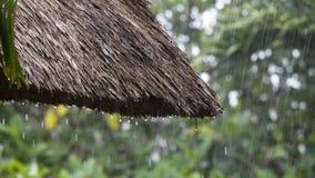 Tropical summer rain falling big rain drops falling down on straw roof in garden. Island Bali, Ubud, Indonesia Royalty Free Stock Photo