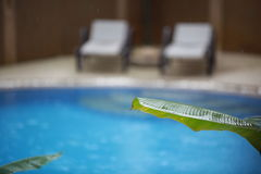 Tropical summer rain falling down on swimming pool on tropical palm leaves foregraund Stock Images
