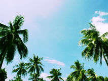 Tropical summer sky with palm tree forest. Tropical island toned photo. Exotic vacation banner template with place for text. Coco palm tree crown on sky Royalty Free Stock Image