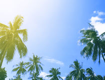 Tropical summer sky with sunflare and palm tree. Tropical island colorful toned photo. Stock Photos