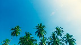 Tropical summer vacation Stock Photography